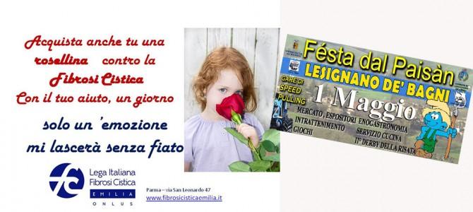 1 maggio: roselline contro la fibrosi cistica a Lesignano (Pr)